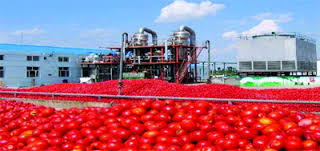 Tomate industrielle