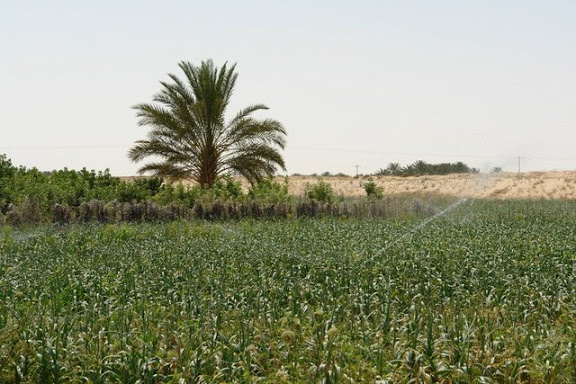 projets agricoles