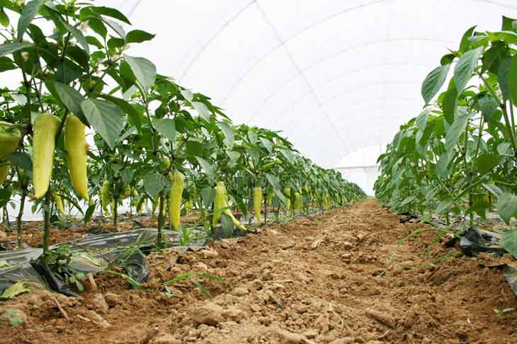 application informatique du foncier agricole